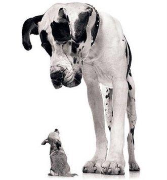 Big-vs-Small