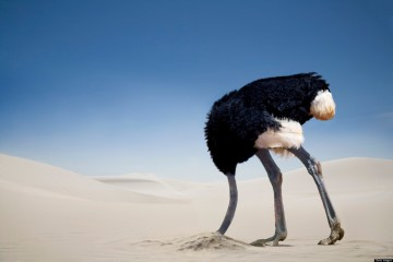 o-OSTRICH-IN-THE-SAND-facebook