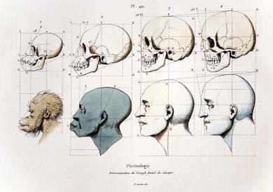 1760a-petrus-camper-facial-angle-eugenics-paul-d-stewart
