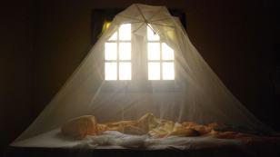bed-net-2048x1152